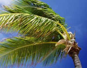 Palm tree inspires Sandia's segmented blade.