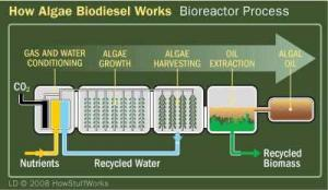 algaetobiodiesel